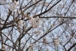 春です(*^-^*)(3月25日)